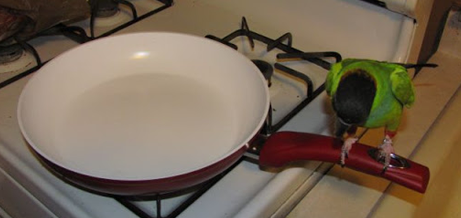 Is Ceramic Cookware Safe for Birds?